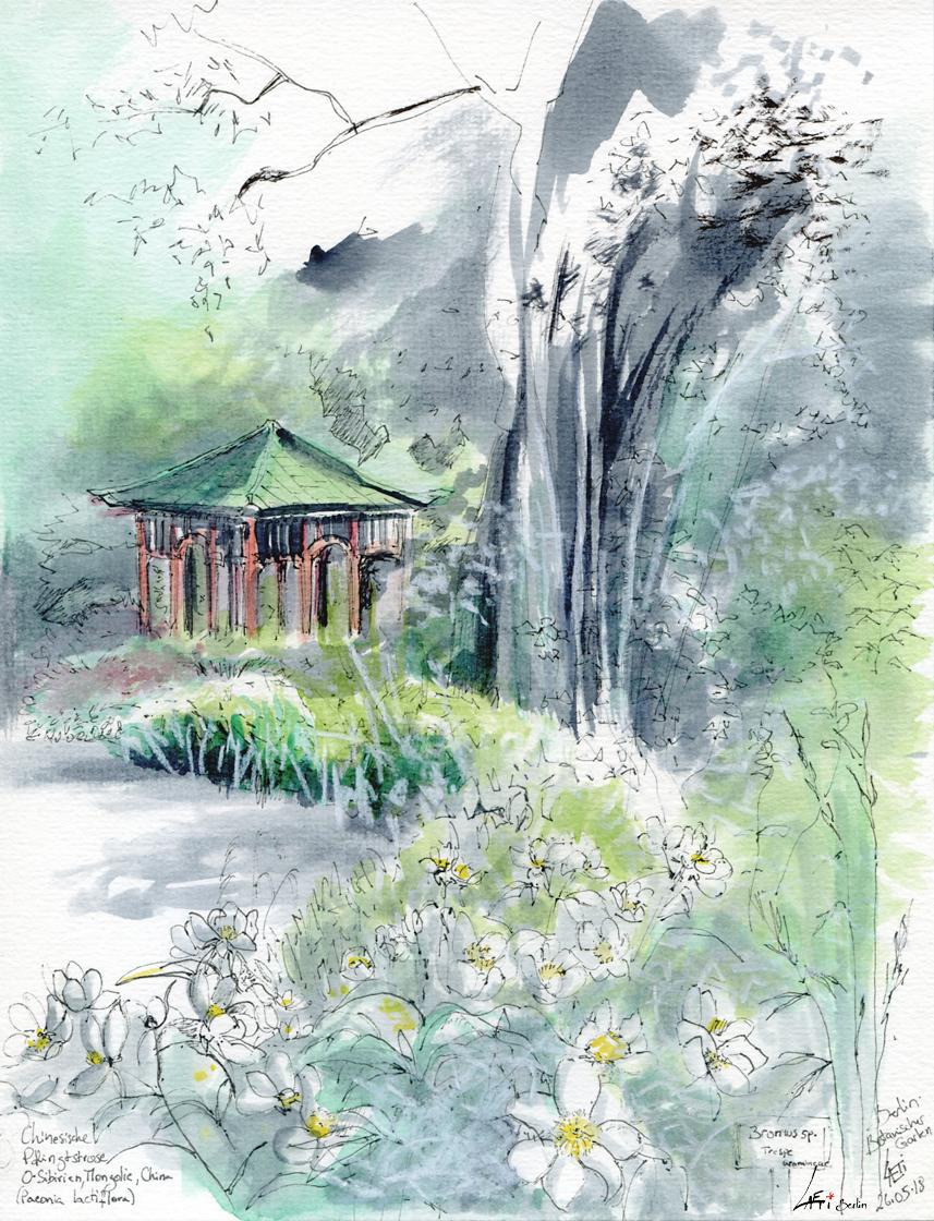 26.05.18- Pagode, Botanischer Garten Berlin (Dahlem/Steglitz)